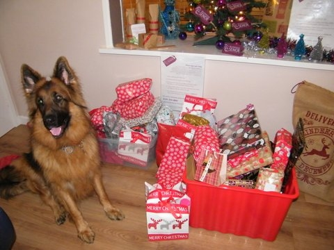 Archie guarding the presents