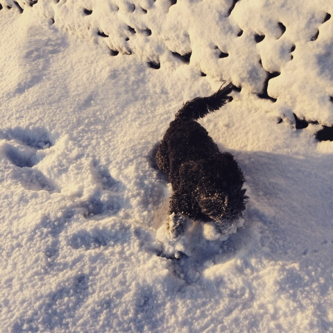 Bess, the office dog, enjoys the snow!